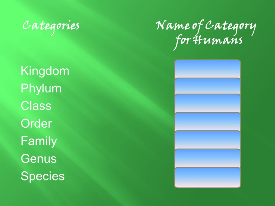 Categories Name of Category for Humans Kingdom Animalia Phylum Chordata Class Mammalia Order Primates Family Hominidae Genus Homo Species Sapien