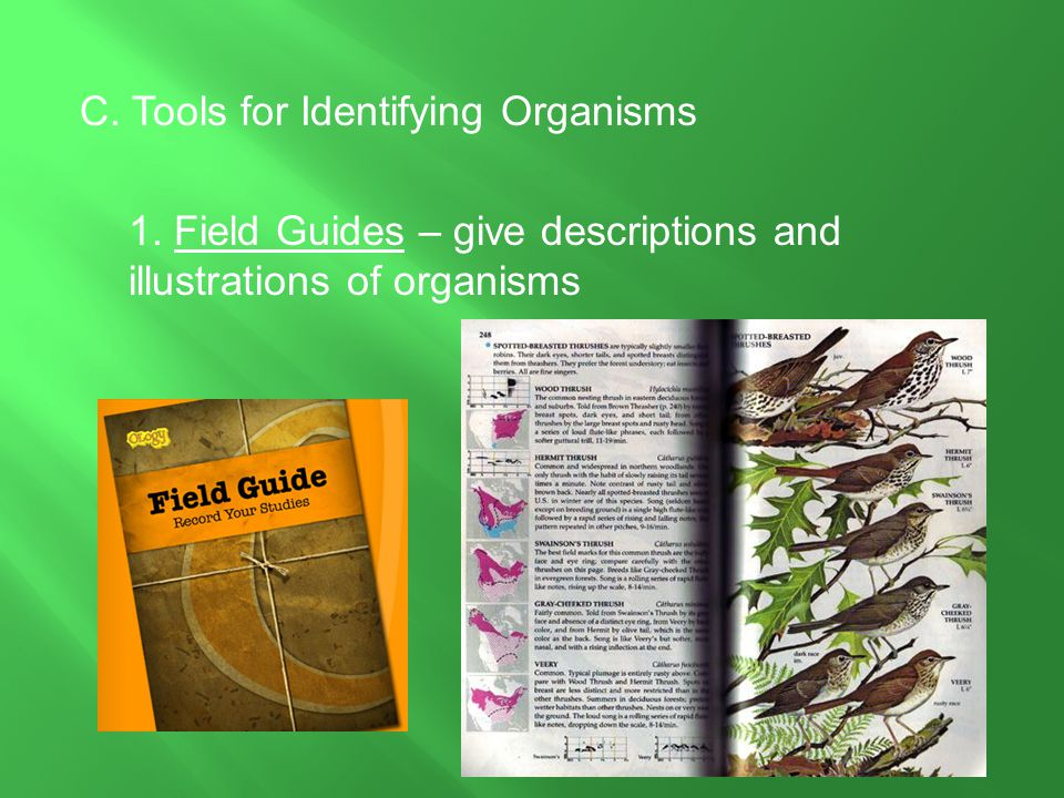 C. Tools for Identifying Organisms 1