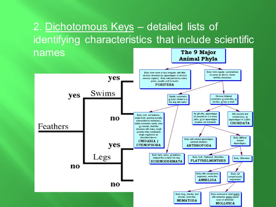 2. Dichotomous Keys – detailed lists of identifying characteristics that include scientific names