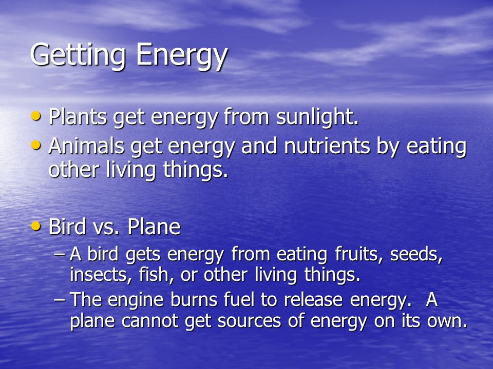 Getting Energy Plants get energy from sunlight.