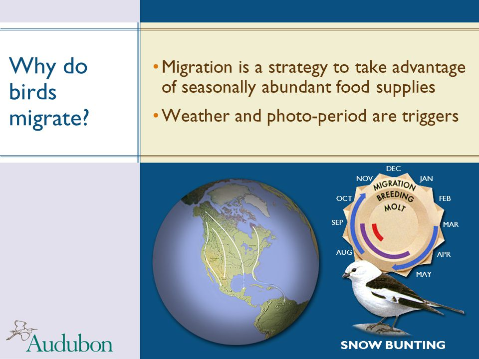 Why do birds migrate Migration is a strategy to take advantage of seasonally abundant food supplies.