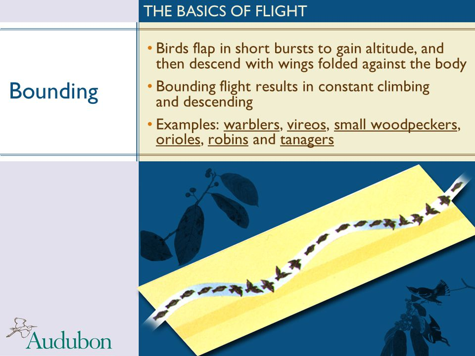 Bounding THE BASICS OF FLIGHT