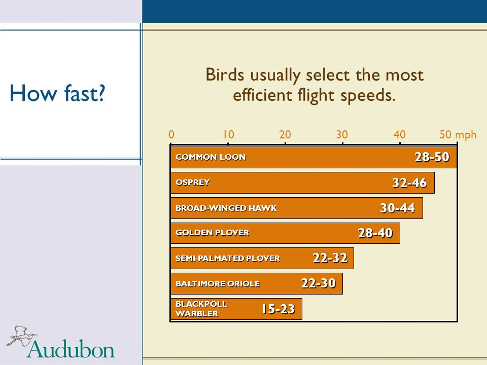 Birds usually select the most efficient flight speeds.