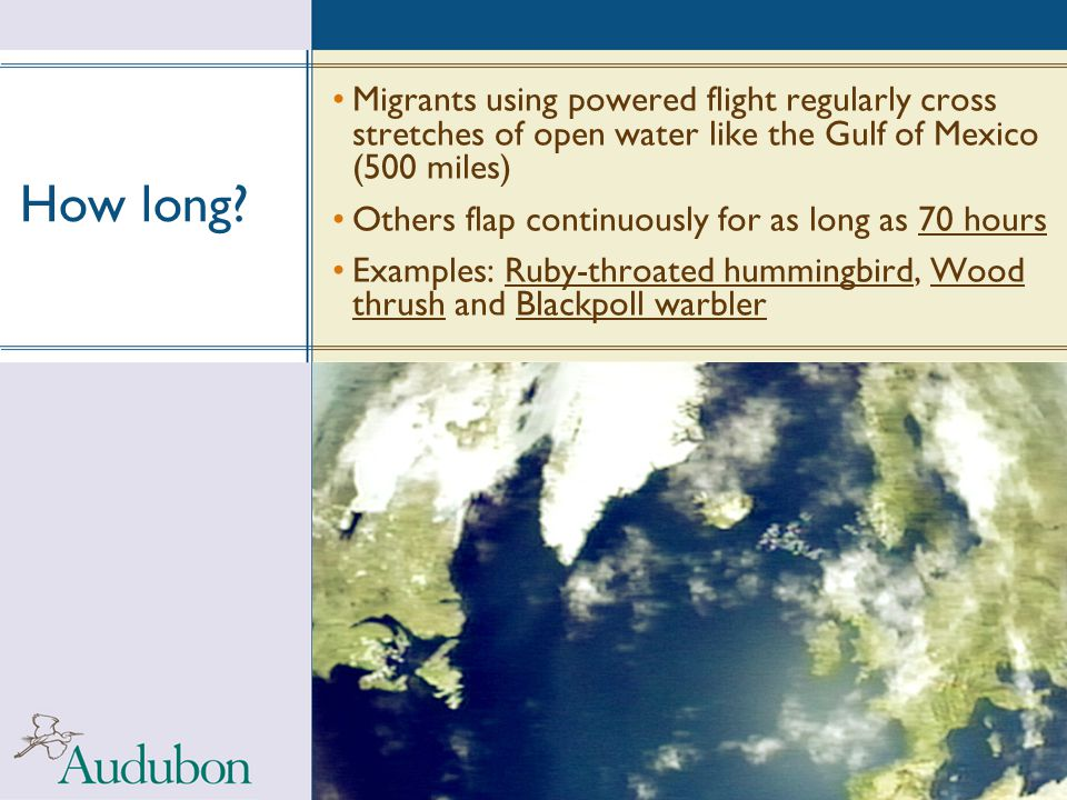 How long Migrants using powered flight regularly cross stretches of open water like the Gulf of Mexico (500 miles)