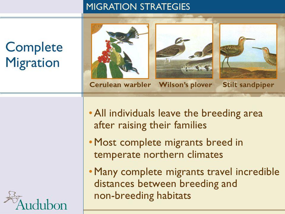 MIGRATION STRATEGIES Complete Migration. Cerulean warbler. Wilson's plover. Stilt sandpiper.