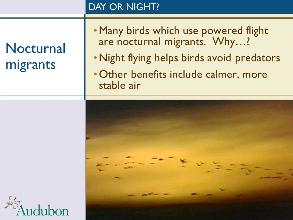 DAY OR NIGHT Nocturnal migrants. Many birds which use powered flight are nocturnal migrants. Why…