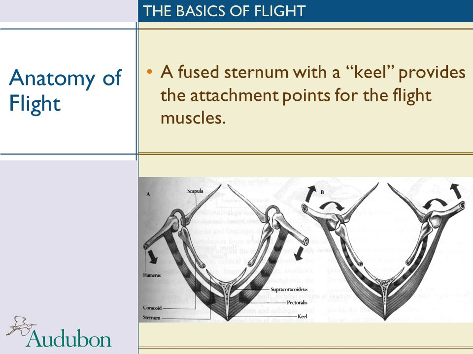 THE BASICS OF FLIGHT Anatomy of Flight.