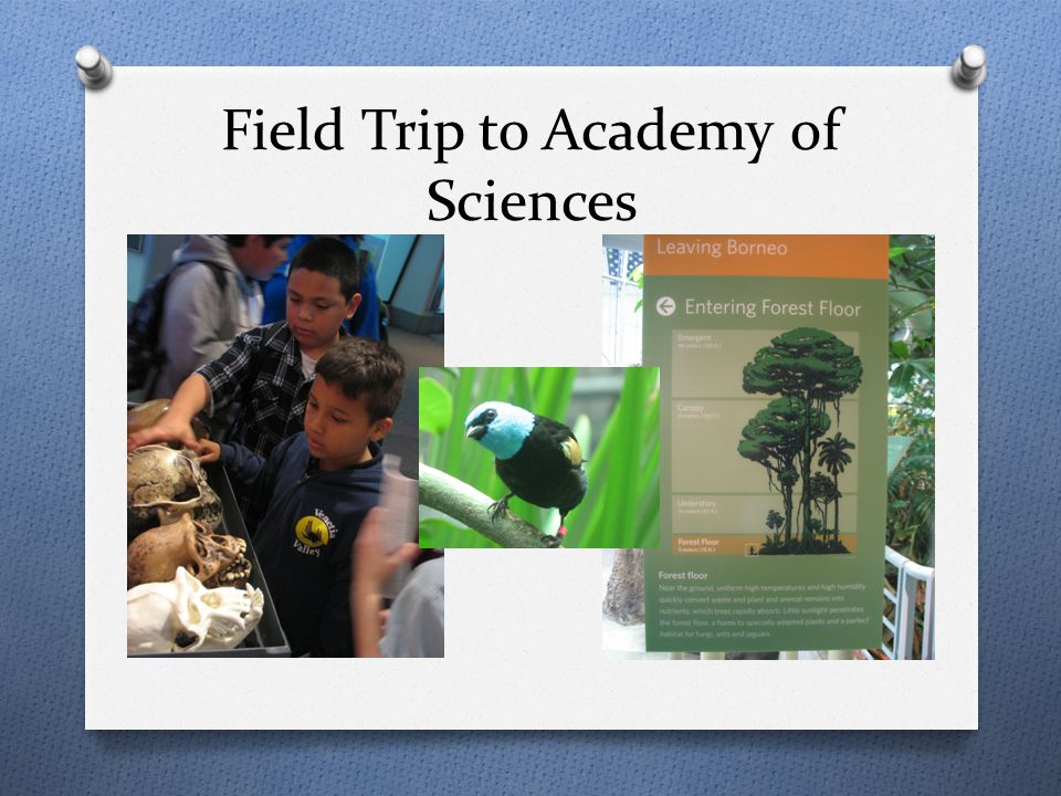 Field Trip to Academy of Sciences