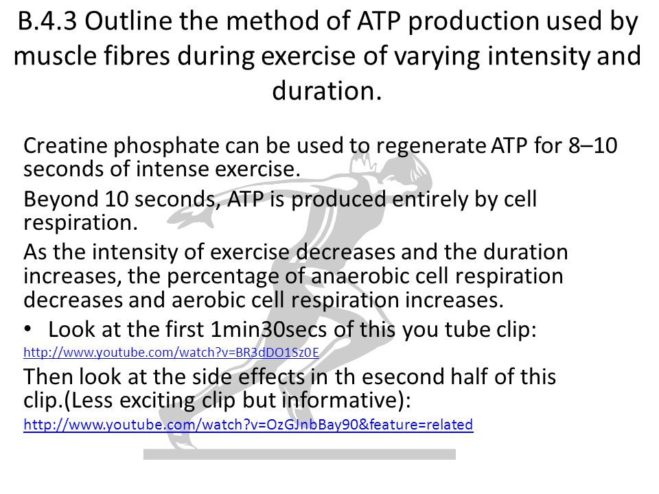 B.4.3 Outline the method of ATP production used by muscle fibres during exercise of varying intensity and duration.