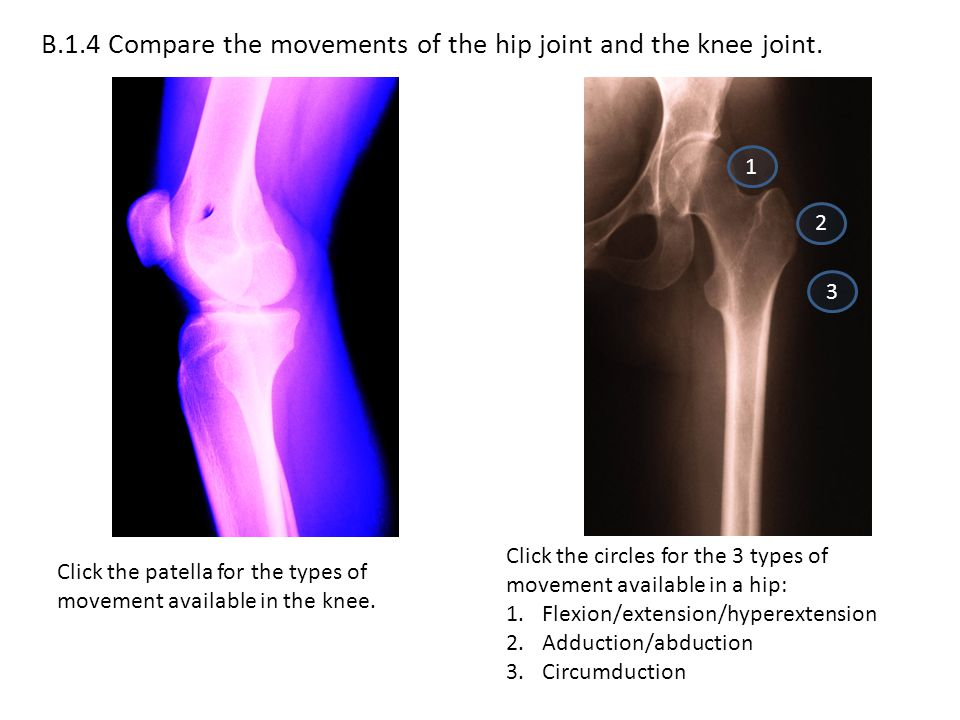 B.1.4 Compare the movements of the hip joint and the knee joint.