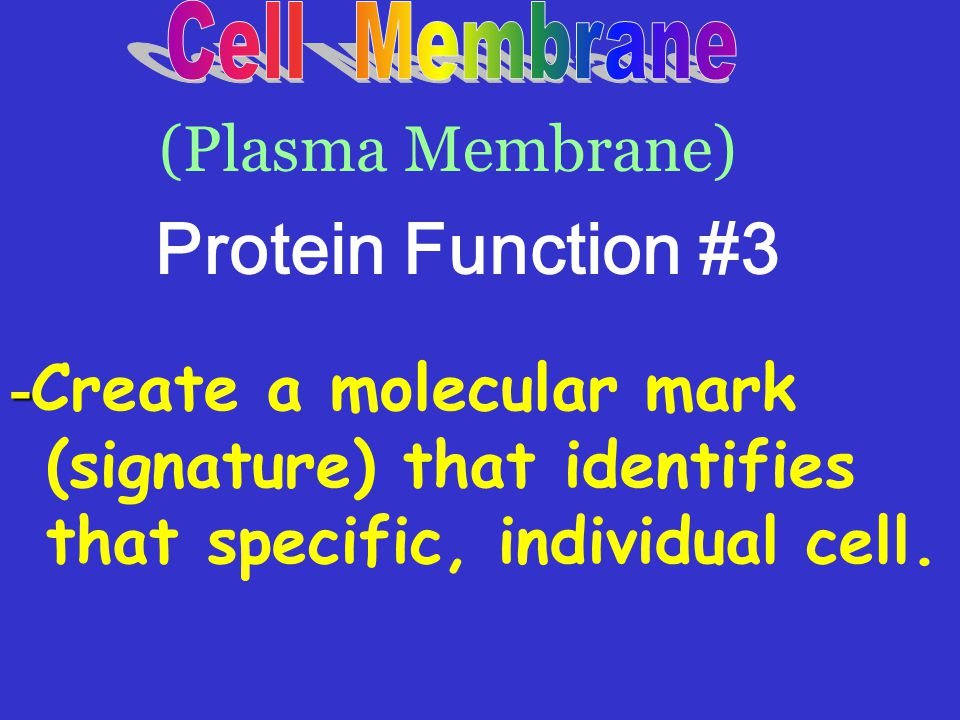 Protein Function #3 (Plasma Membrane)