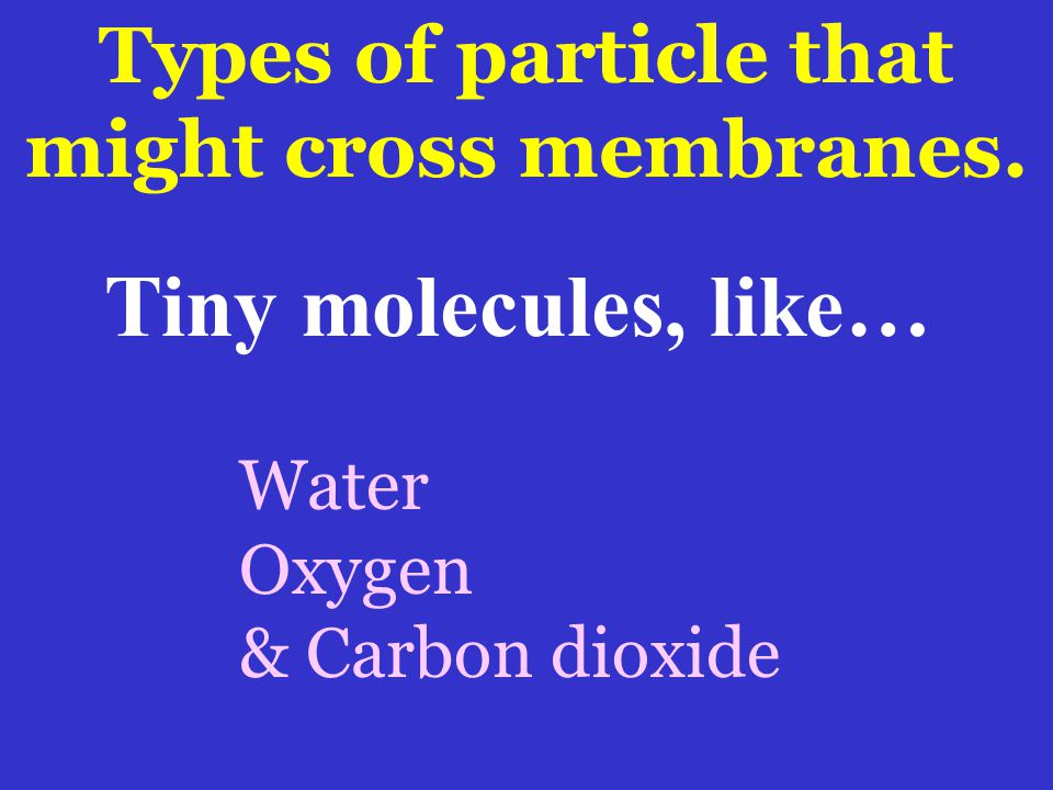 Types of particle that might cross membranes.