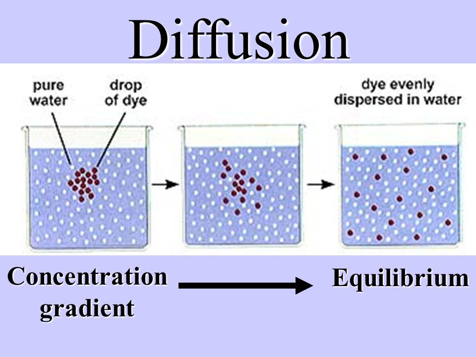 Diffusion Concentration gradient Equilibrium
