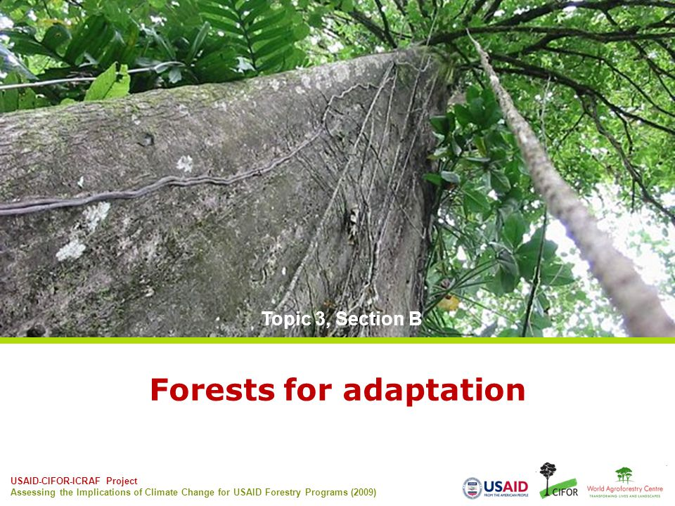 Forests for adaptation