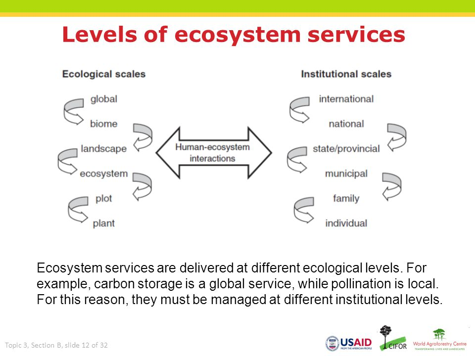 Levels of ecosystem services