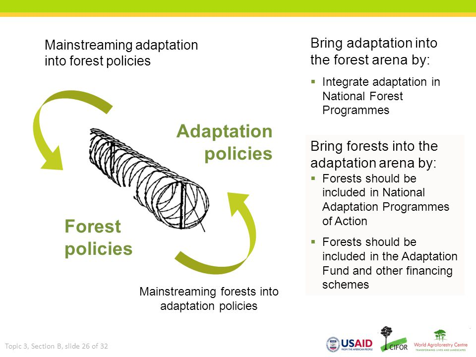 Mainstreaming adaptation into forest policies