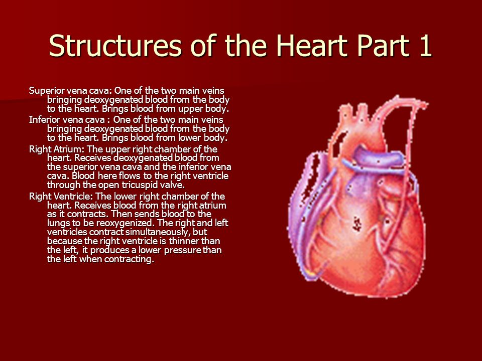 Structures of the Heart Part 1