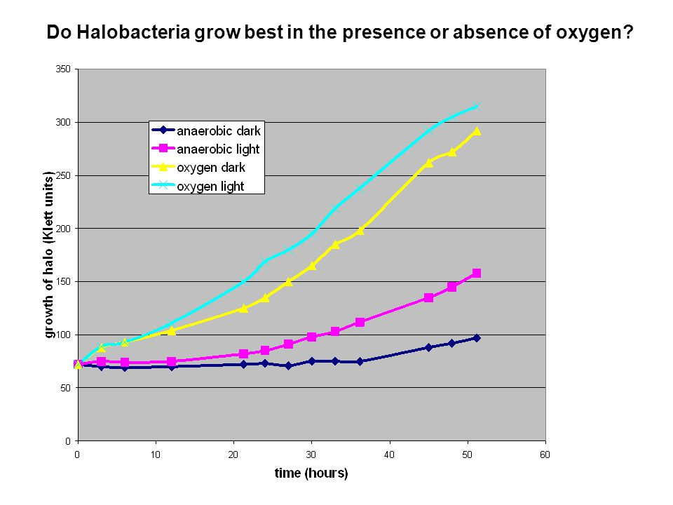 Do Halobacteria grow best in the presence or absence of oxygen