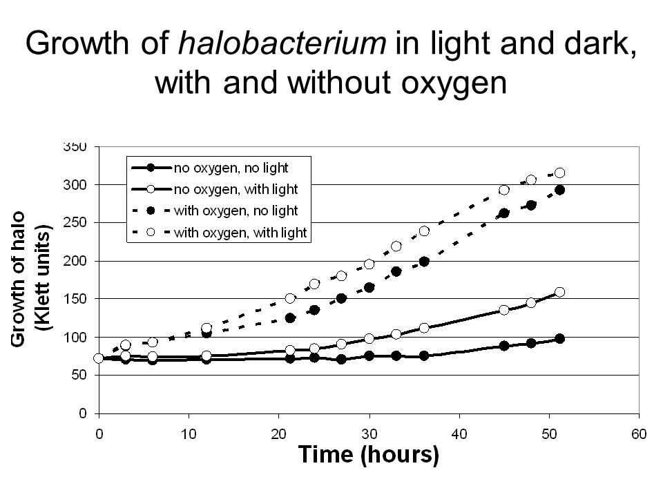 Growth of halobacterium in light and dark, with and without oxygen