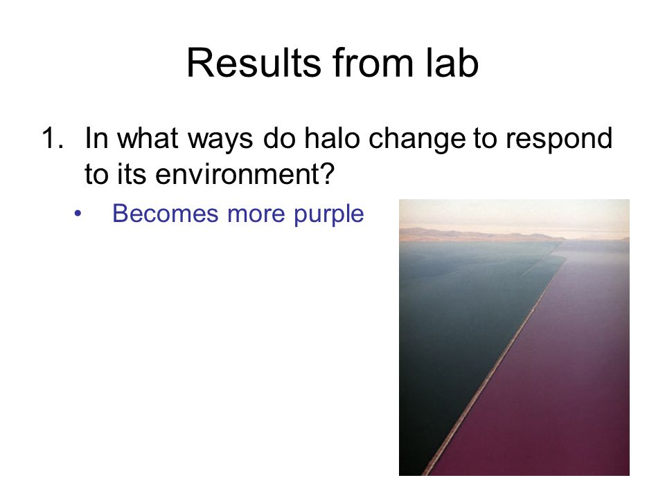 Results from lab In what ways do halo change to respond to its environment Becomes more purple