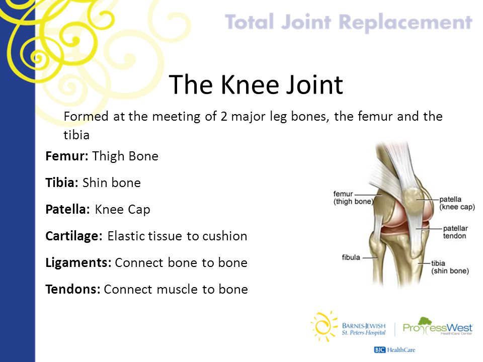 The Knee Joint Formed at the meeting of 2 major leg bones, the femur and the tibia. Femur: Thigh Bone.