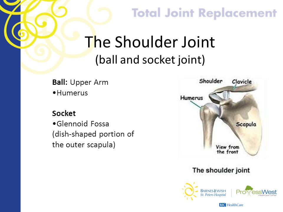 The Shoulder Joint (ball and socket joint)