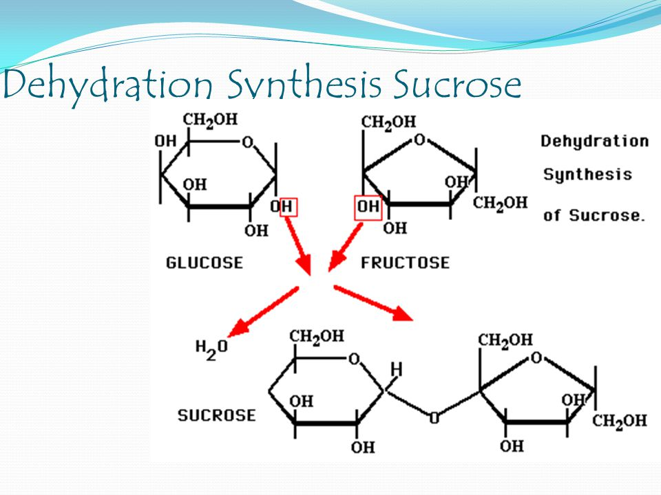 Dehydration Synthesis Sucrose