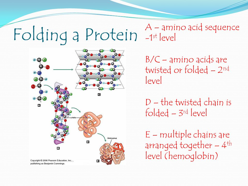 Folding a Protein A – amino acid sequence -1st level