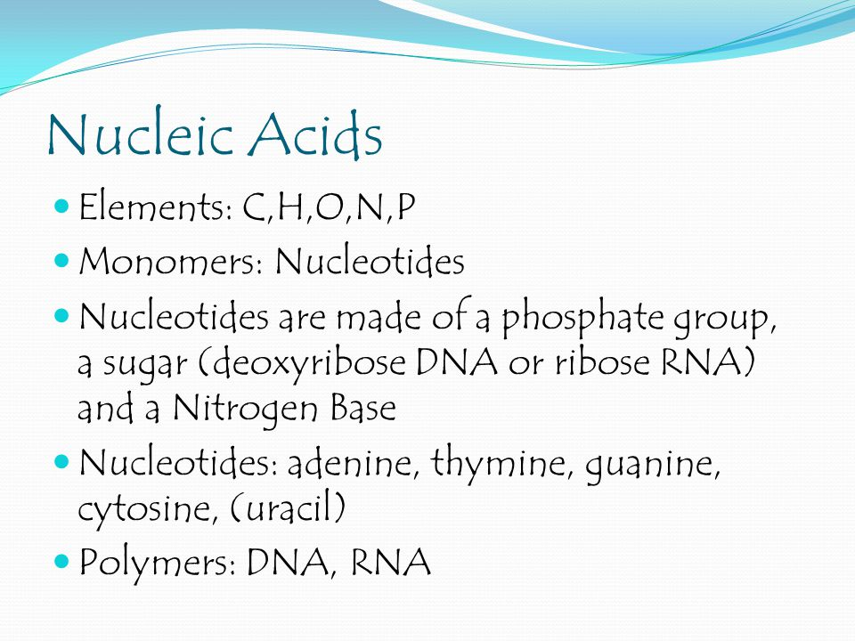 Nucleic Acids Elements: C,H,O,N,P Monomers: Nucleotides