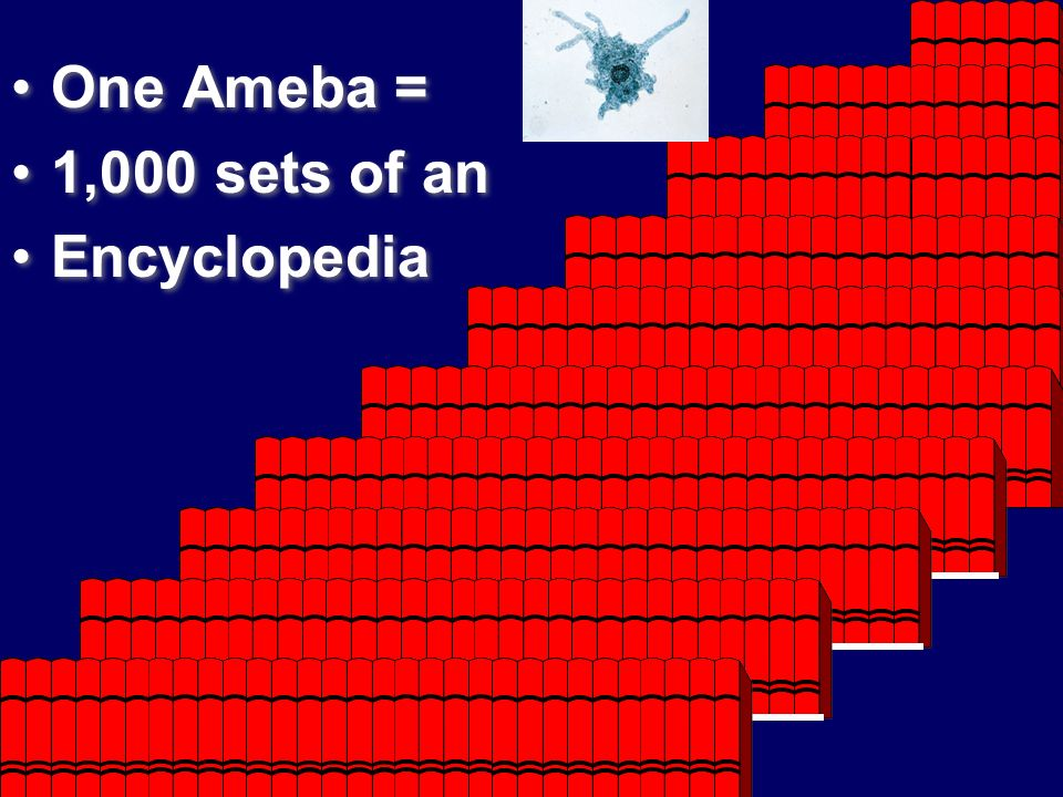 One Ameba = 1,000 sets of an Encyclopedia