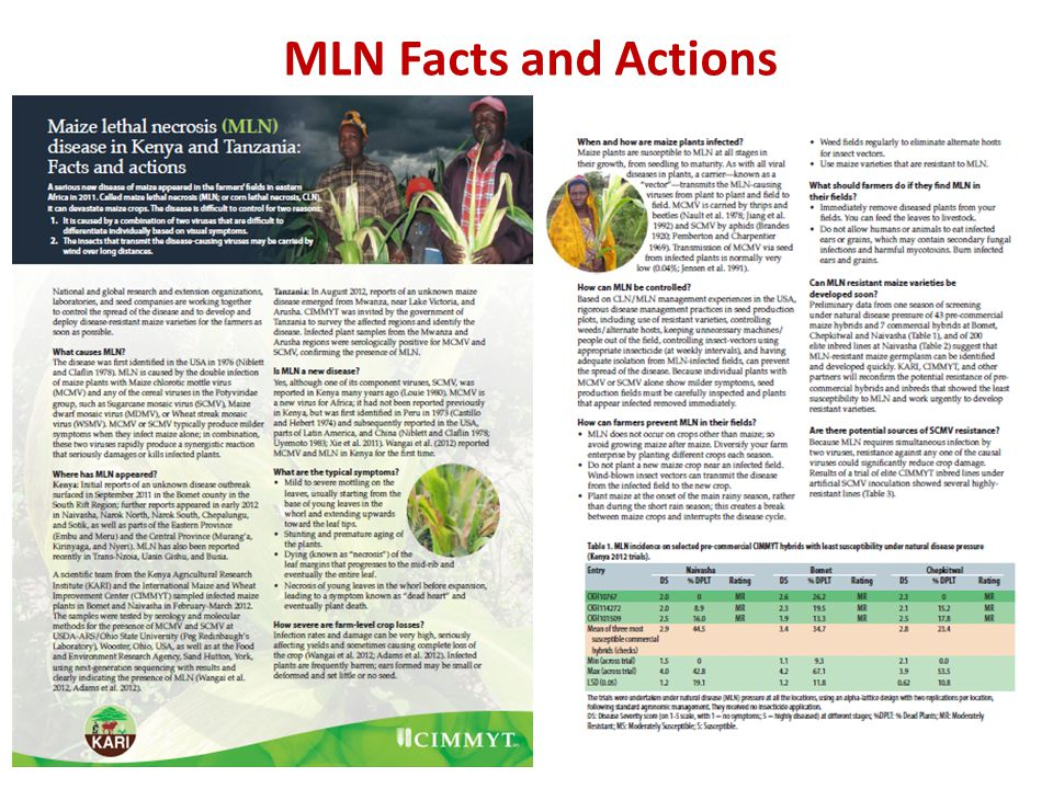 MLN Facts and Actions