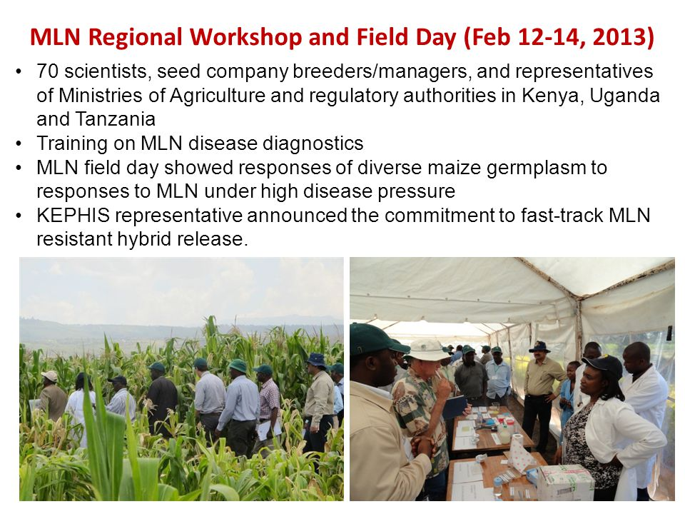 MLN Regional Workshop and Field Day (Feb 12-14, 2013)