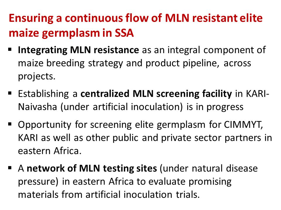 Ensuring a continuous flow of MLN resistant elite maize germplasm in SSA