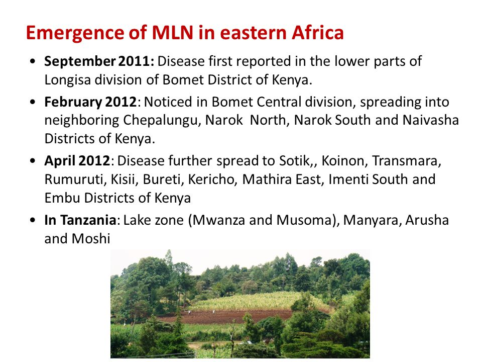 Emergence of MLN in eastern Africa