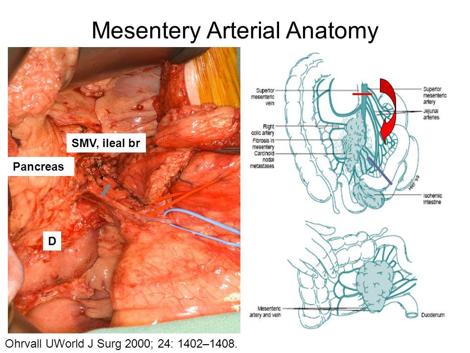 Mesentery Arterial Anatomy