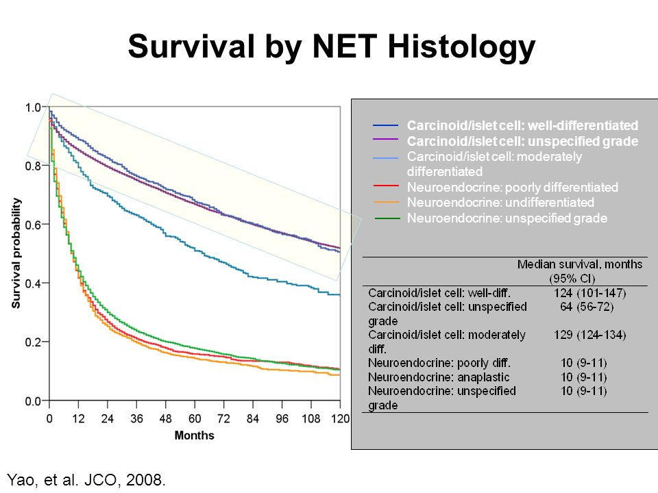 Survival by NET Histology