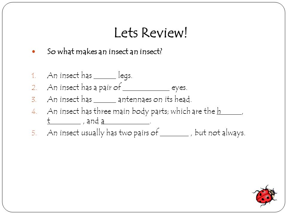 Lets Review! So what makes an insect an insect An insect has legs.