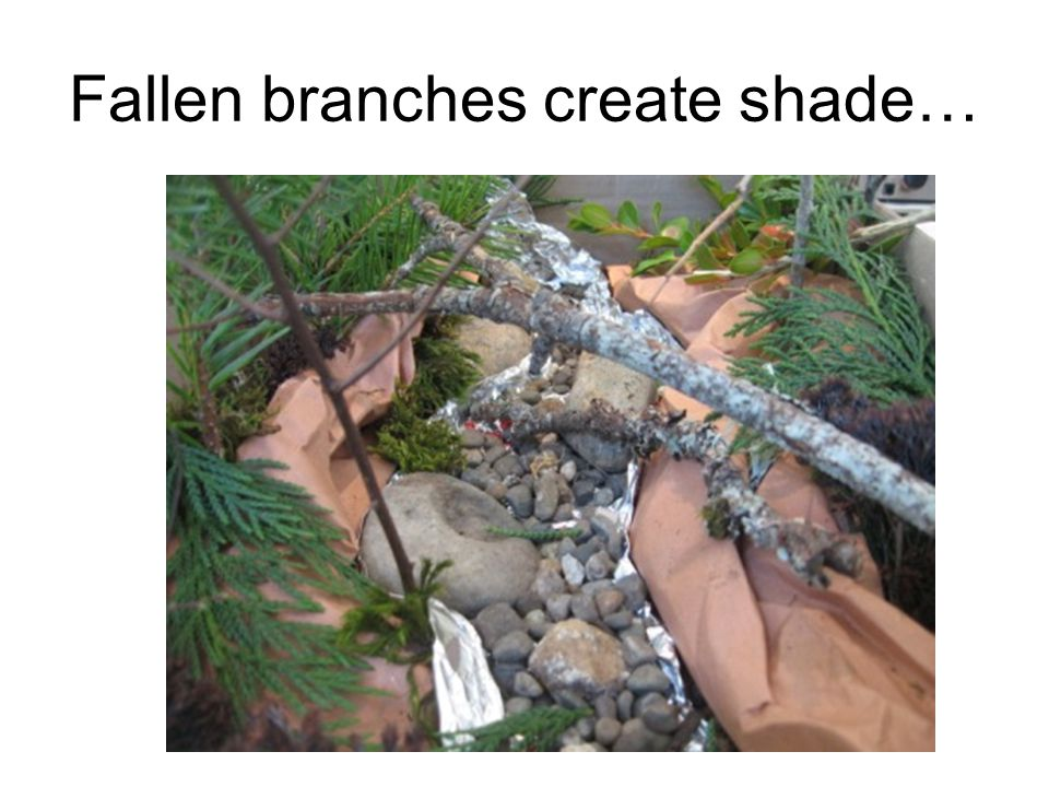 Fallen branches create shade…