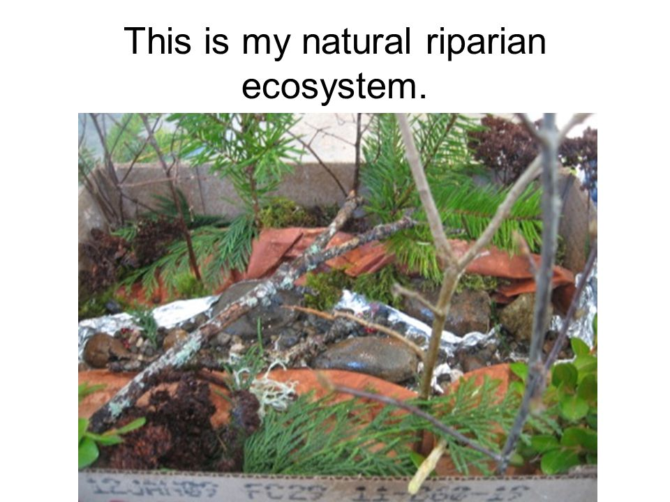This is my natural riparian ecosystem.