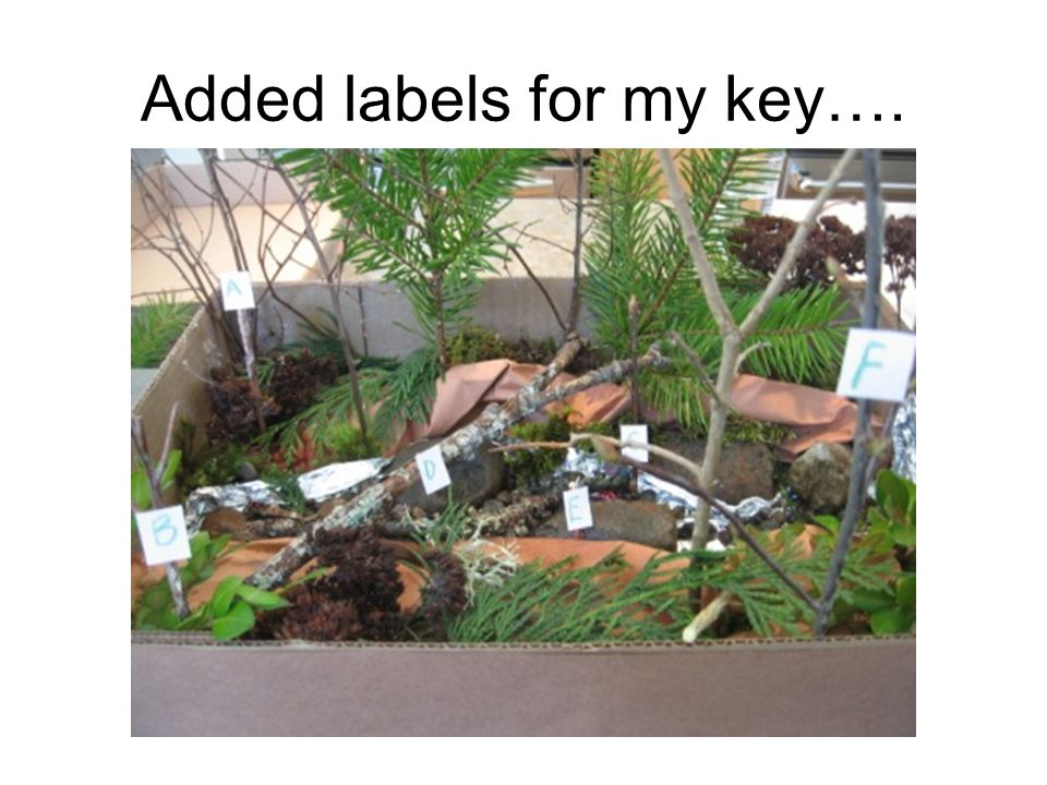 Added labels for my key….