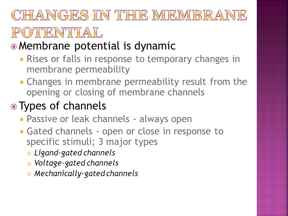 Changes in the Membrane Potential