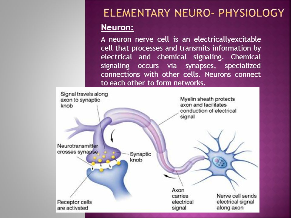 Elementary Neuro- Physiology