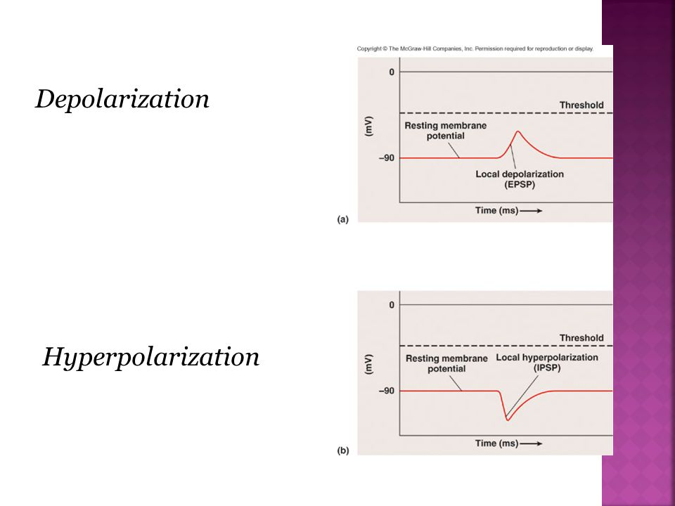 Depolarization Hyperpolarization
