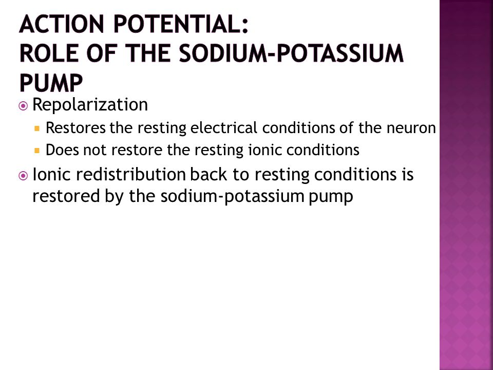 Action Potential: Role of the Sodium-Potassium Pump