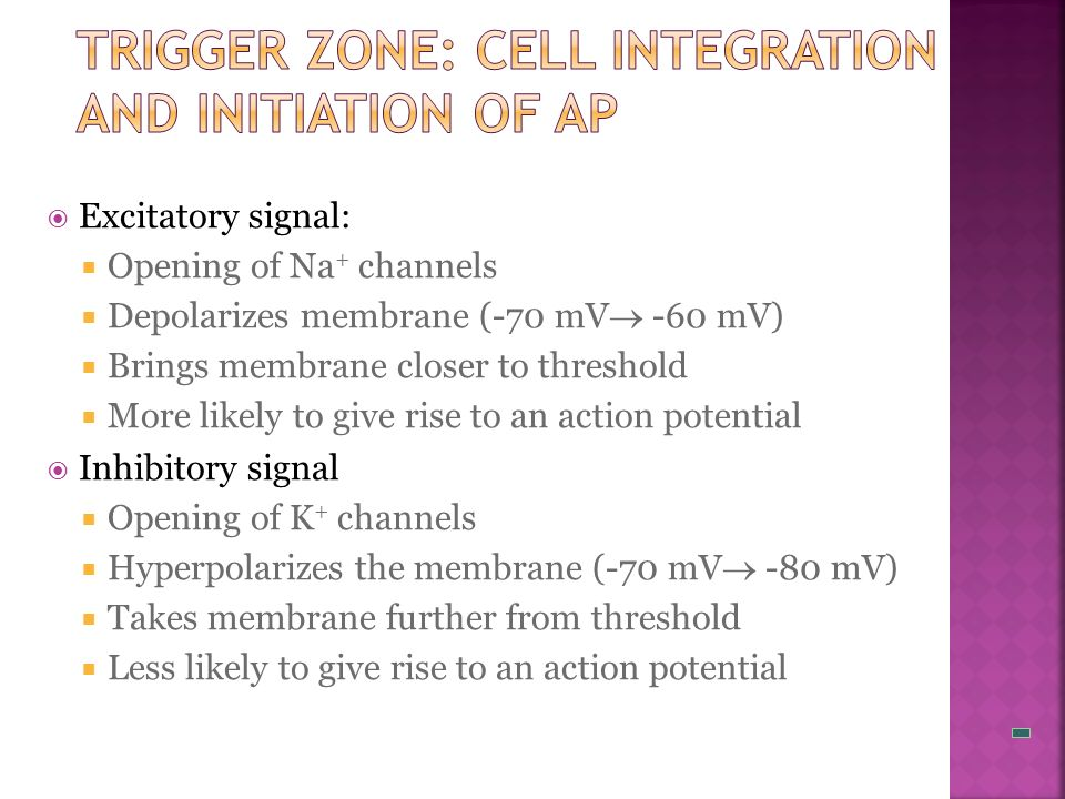 Trigger Zone: Cell Integration and Initiation of AP