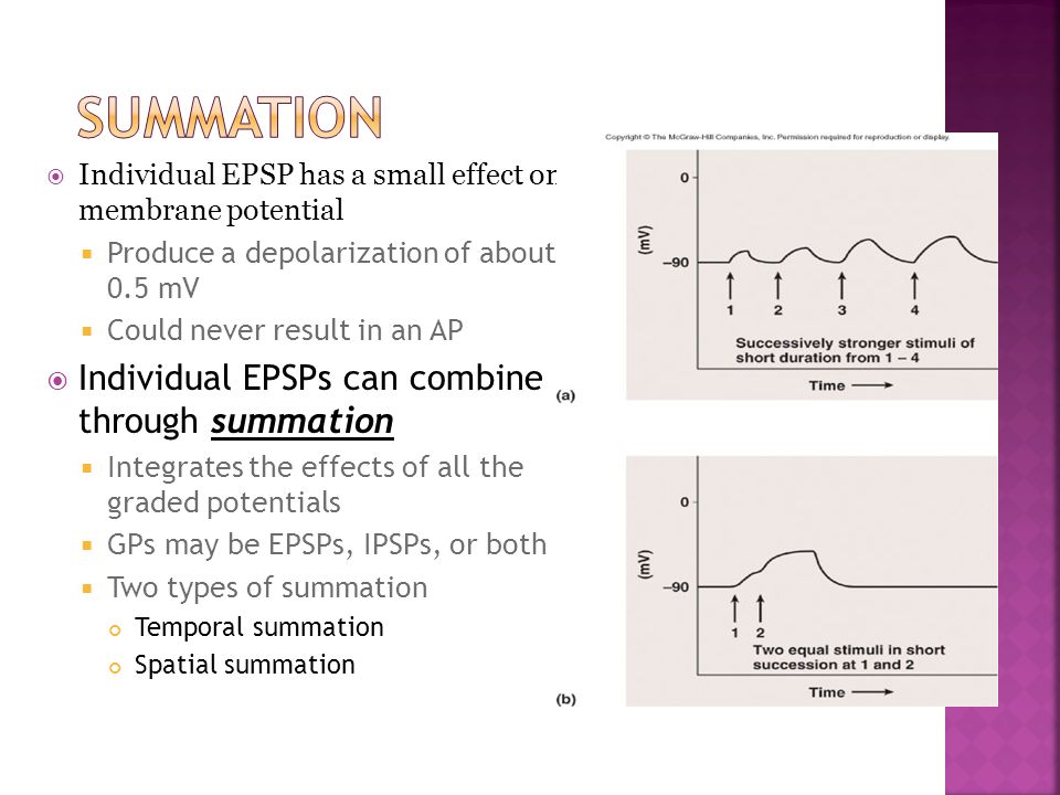 SUMMATION Individual EPSPs can combine through summation