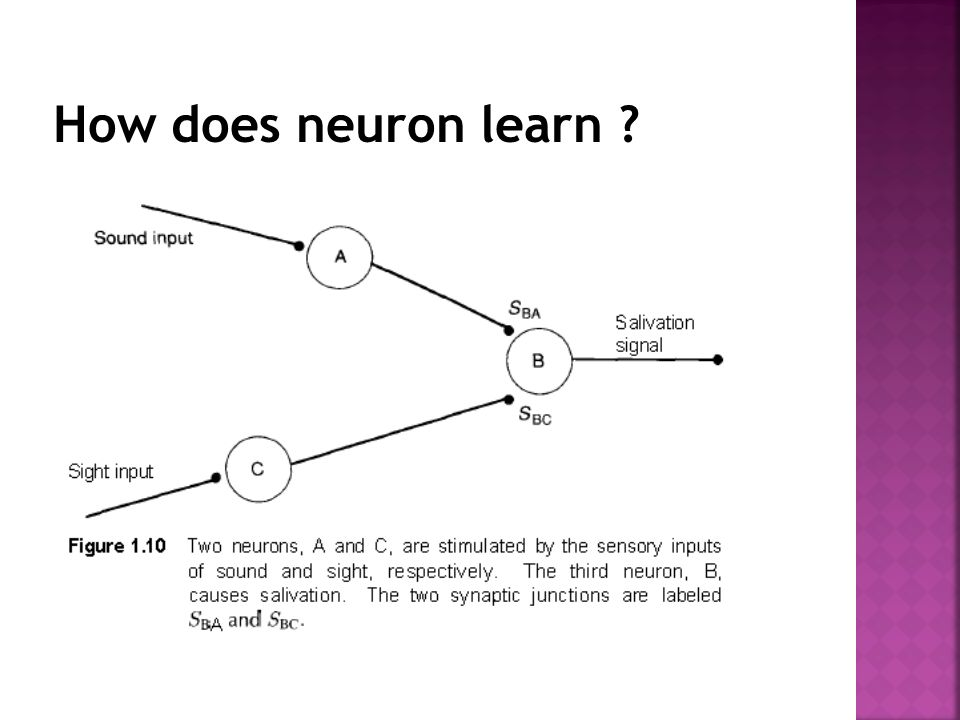 How does neuron learn