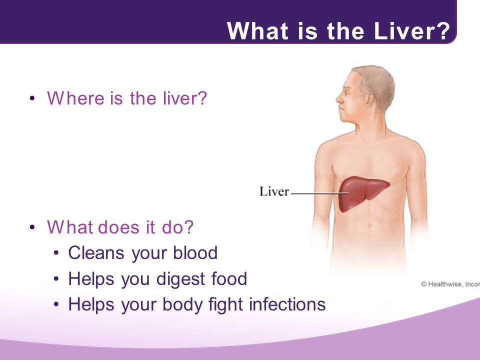 What is the Liver Where is the liver What does it do