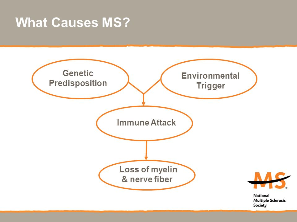 What Causes MS Genetic Environmental Predisposition Trigger