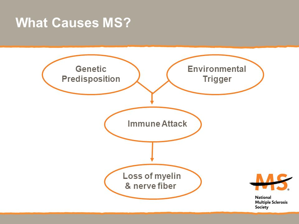 What Causes MS Genetic Predisposition Environmental Trigger